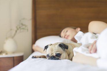 bed-bedroom-cute-545016